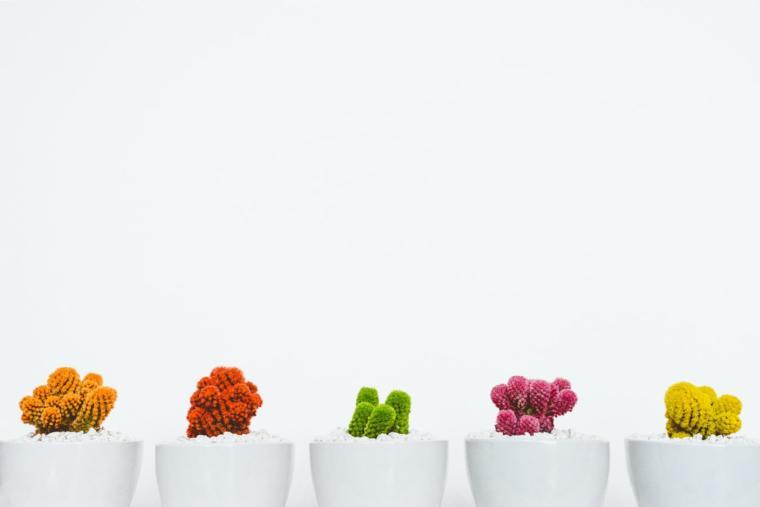 cvijeće u saksijama