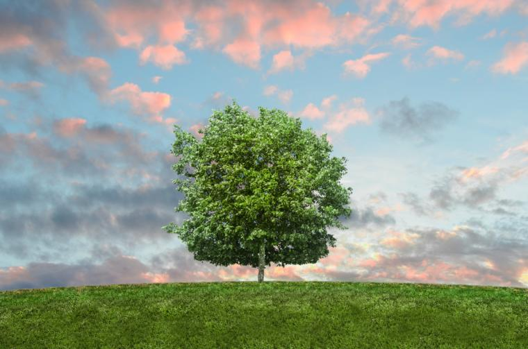 zelena krošnja drveta na livadi